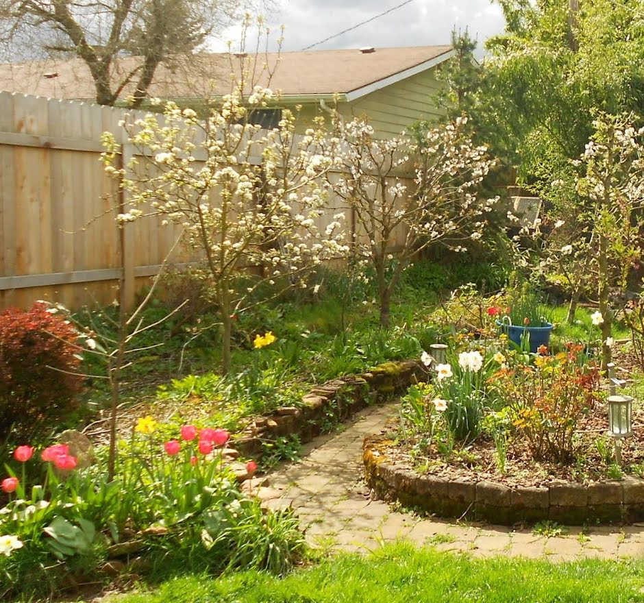 Trees For Small Backyard: Backyard Orchard: Fruit Tree Pruning & Care